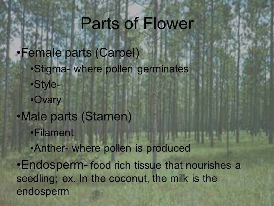 Parts of Flower Female parts (Carpel) Stigma- where pollen germinates Style- Ovary Male parts (Stamen) Filament Anther- where pollen is produced Endosperm- food rich tissue that nourishes a seedling; ex.