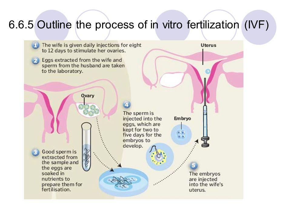Clomid Infertility Male