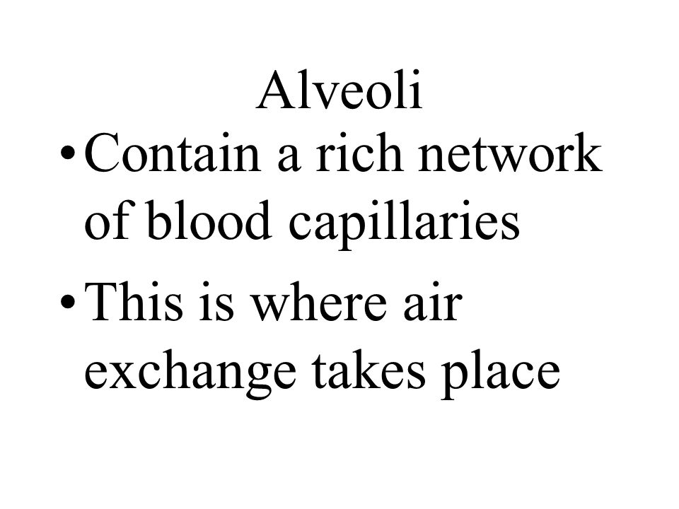 Alveoli Contain a rich network of blood capillaries This is where air exchange takes place