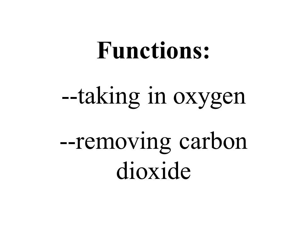 Functions: --taking in oxygen --removing carbon dioxide