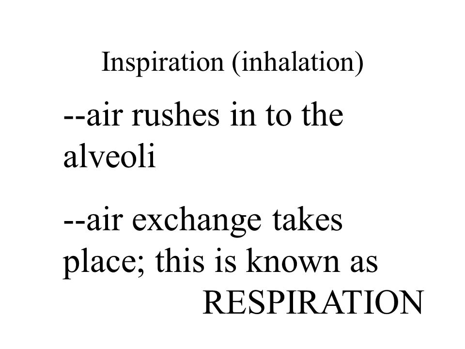 Inspiration (inhalation) --air rushes in to the alveoli --air exchange takes place; this is known as RESPIRATION