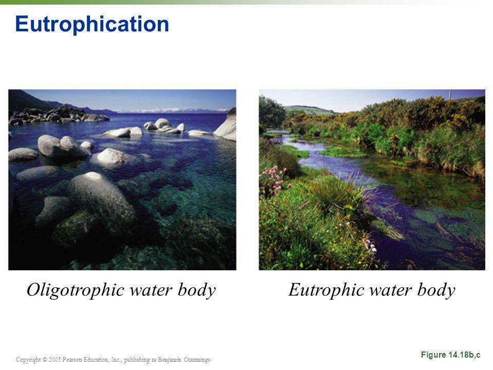 Copyright © 2005 Pearson Education, Inc., publishing as Benjamin Cummings Eutrophication Figure 14.18b,c Oligotrophic water bodyEutrophic water body