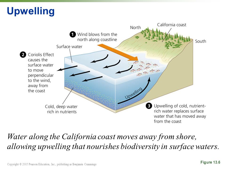 Copyright © 2005 Pearson Education, Inc., publishing as Benjamin Cummings Upwelling Water along the California coast moves away from shore, allowing upwelling that nourishes biodiversity in surface waters.
