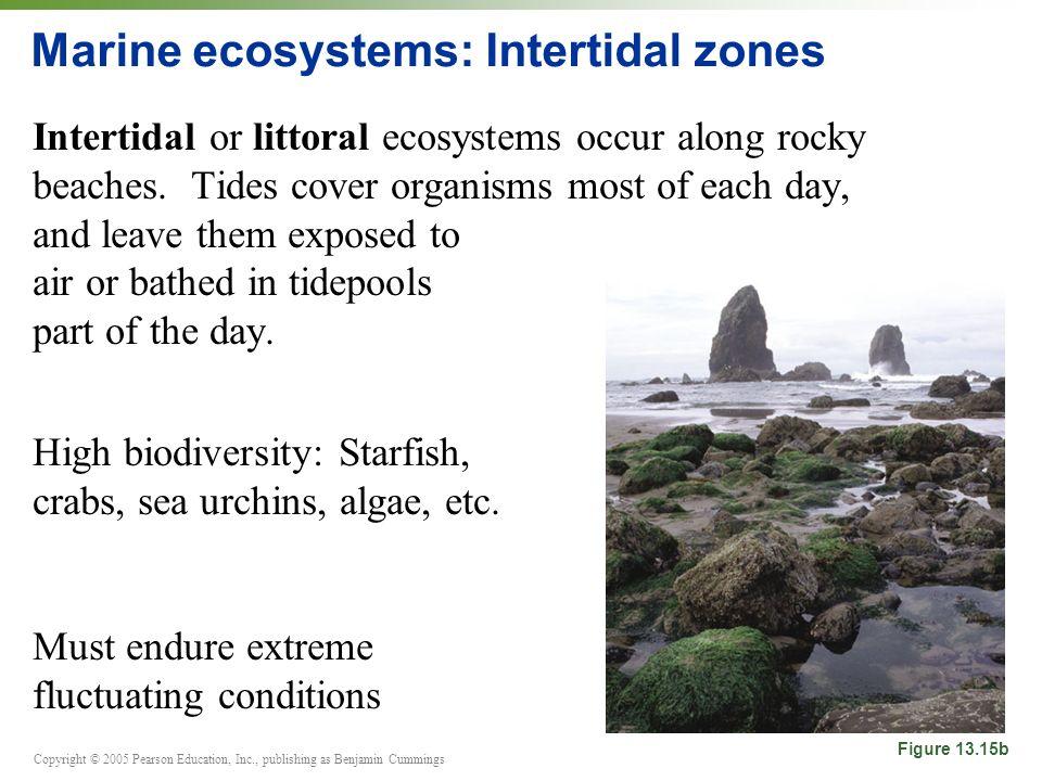 Copyright © 2005 Pearson Education, Inc., publishing as Benjamin Cummings Marine ecosystems: Intertidal zones Intertidal or littoral ecosystems occur along rocky beaches.