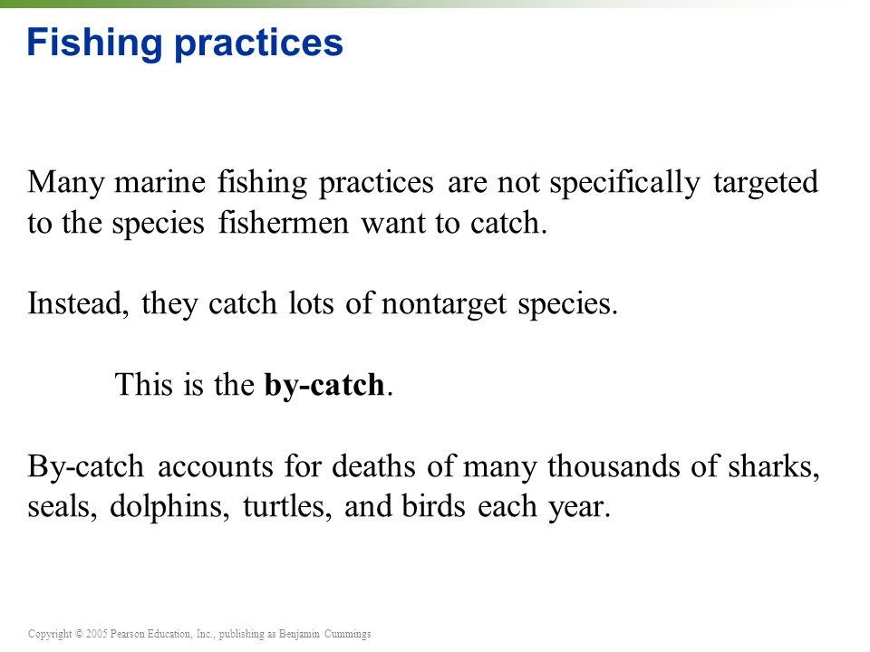 Copyright © 2005 Pearson Education, Inc., publishing as Benjamin Cummings Fishing practices Many marine fishing practices are not specifically targeted to the species fishermen want to catch.