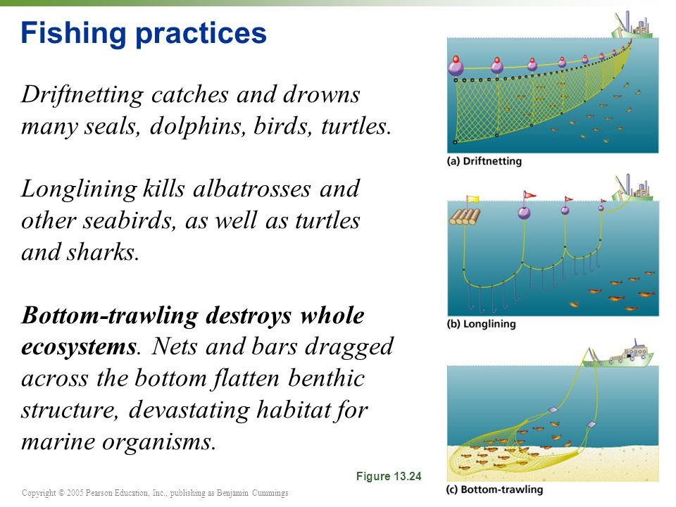 Copyright © 2005 Pearson Education, Inc., publishing as Benjamin Cummings Fishing practices Driftnetting catches and drowns many seals, dolphins, birds, turtles.