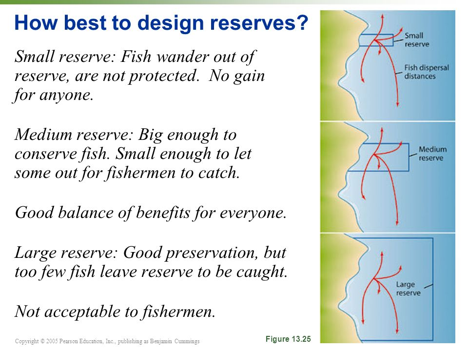 Copyright © 2005 Pearson Education, Inc., publishing as Benjamin Cummings Small reserve: Fish wander out of reserve, are not protected.