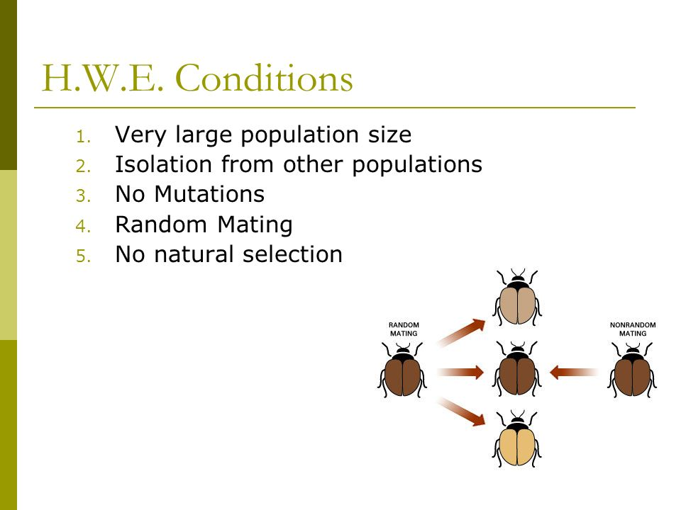 H.W.E. Conditions 1. Very large population size 2.