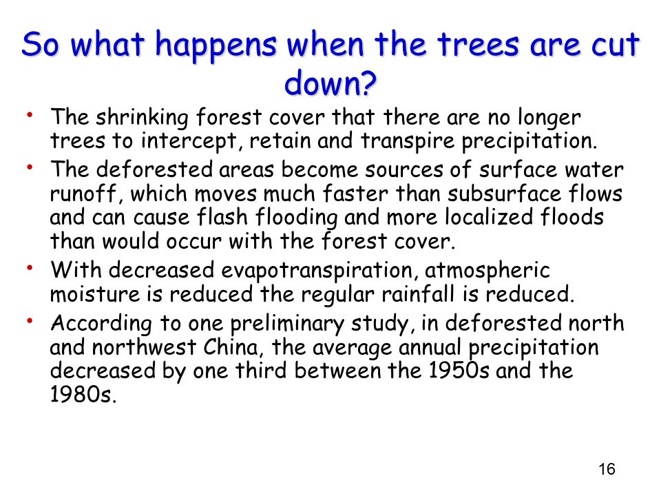 16 So what happens when the trees are cut down? The shrinking forest cover that there are no longer trees to intercept, retain and transpire precipita