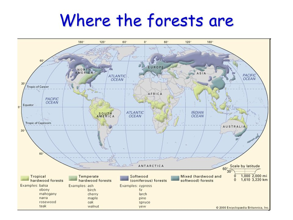 3 Where the forests are