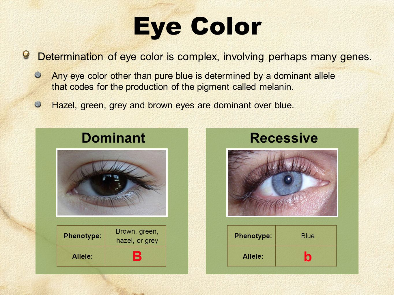 Eye Color Determination of eye color is complex, involving perhaps many genes.