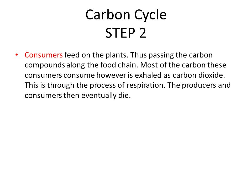 Carbon Cycle STEP 2 Consumers feed on the plants.