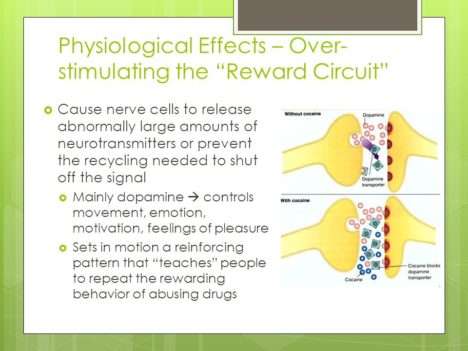 Physiological Effects – Over- stimulating the Reward Circuit  Cause nerve cells to release abnormally large amounts of neurotransmitters or prevent the recycling needed to shut off the signal  Mainly dopamine  controls movement, emotion, motivation, feelings of pleasure  Sets in motion a reinforcing pattern that teaches people to repeat the rewarding behavior of abusing drugs