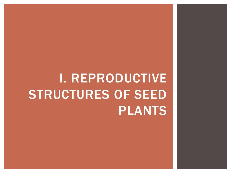I. REPRODUCTIVE STRUCTURES OF SEED PLANTS