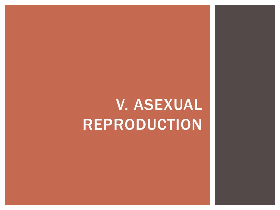 V. ASEXUAL REPRODUCTION