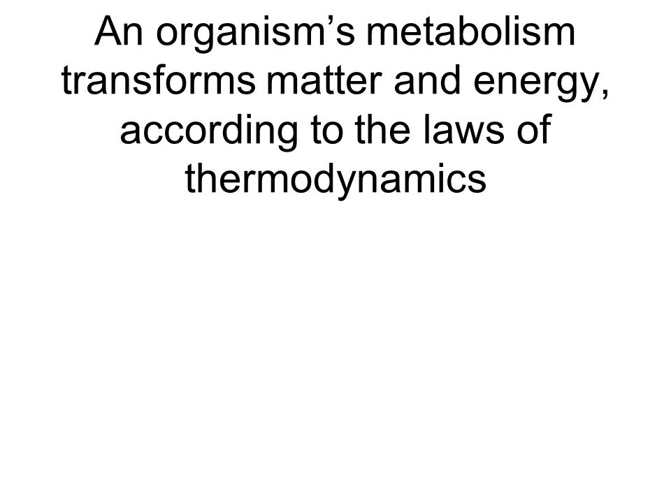 An organism's metabolism transforms matter and energy, according to the laws of thermodynamics