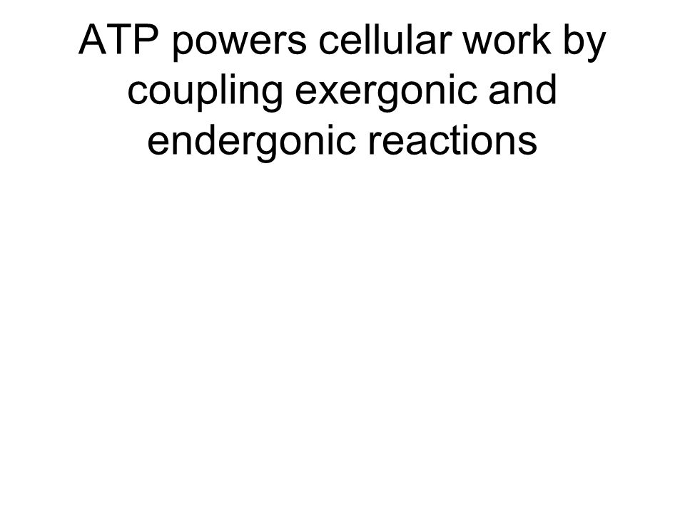 ATP powers cellular work by coupling exergonic and endergonic reactions