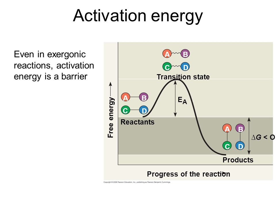 Activation energy Progress of the reaction Products Reactants ∆G < O Transition state Free energy EAEA DC BA D D C C B B A A Even in exergonic reactions, activation energy is a barrier