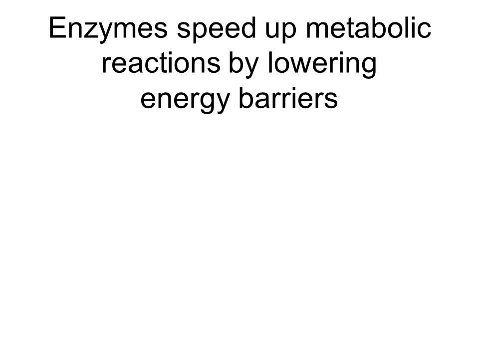 Enzymes speed up metabolic reactions by lowering energy barriers