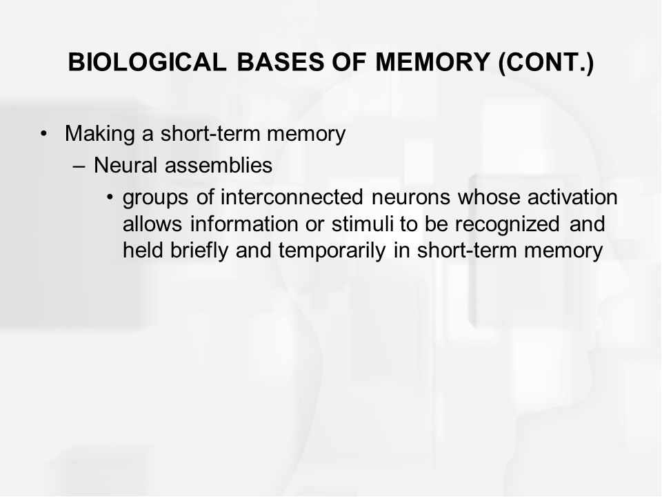 BIOLOGICAL BASES OF MEMORY (CONT.) Making a short-term memory –Neural assemblies groups of interconnected neurons whose activation allows information or stimuli to be recognized and held briefly and temporarily in short-term memory