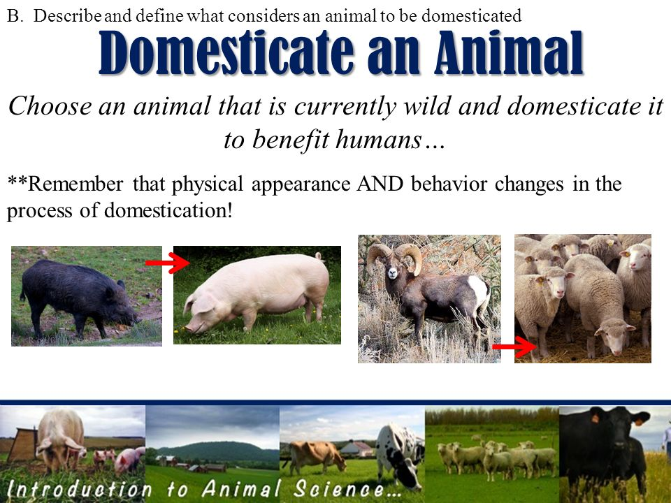 Introduction to ANIMAL SCIENCE Objectives AList 5 functions of – Introduction to Animals Worksheet