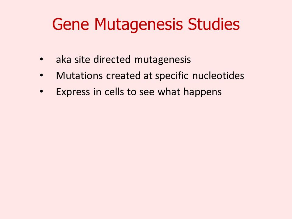Gene Mutagenesis Studies aka site directed mutagenesis Mutations created at specific nucleotides Express in cells to see what happens