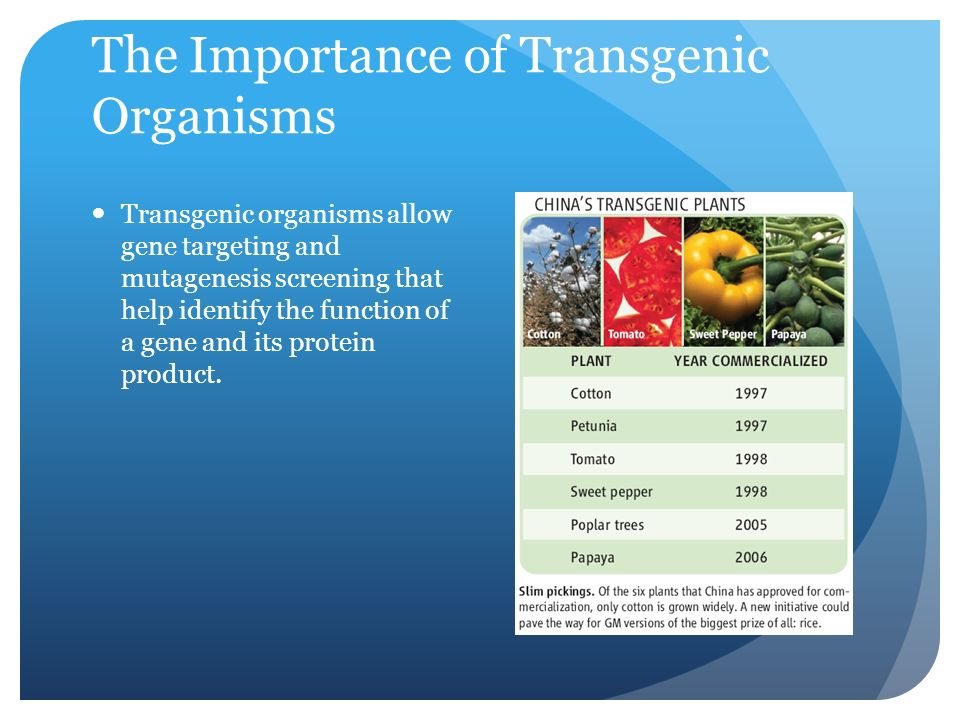 The Importance of Transgenic Organisms Transgenic organisms allow gene targeting and mutagenesis screening that help identify the function of a gene and its protein product.