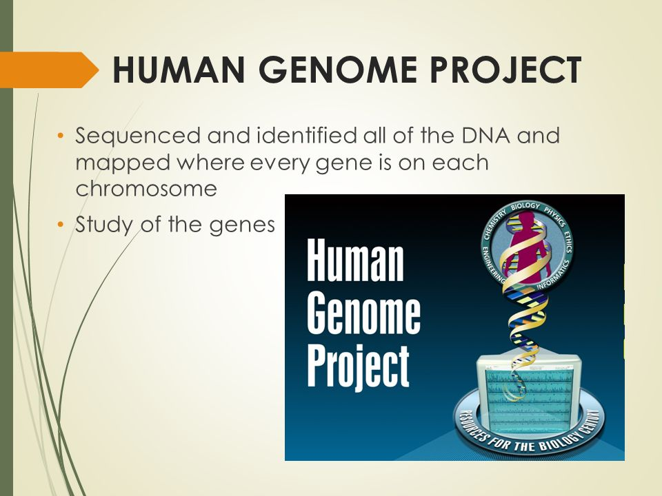 HUMAN GENOME PROJECT Sequenced and identified all of the DNA and mapped where every gene is on each chromosome Study of the genes