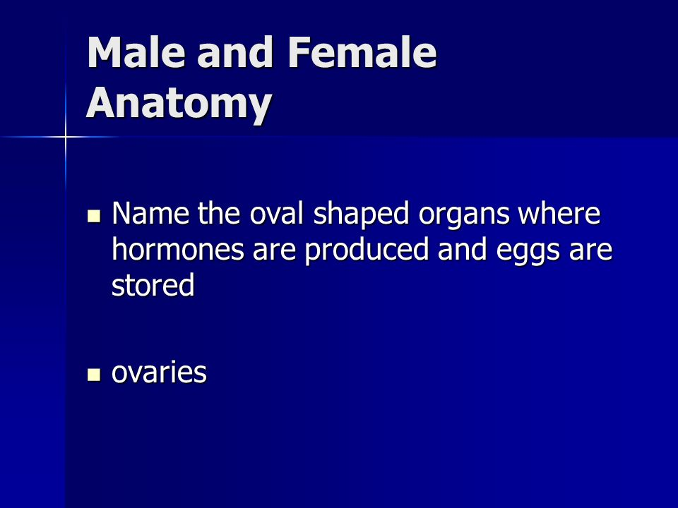 Male and Female Anatomy Name the oval shaped organs where hormones are produced and eggs are stored Name the oval shaped organs where hormones are produced and eggs are stored ovaries ovaries