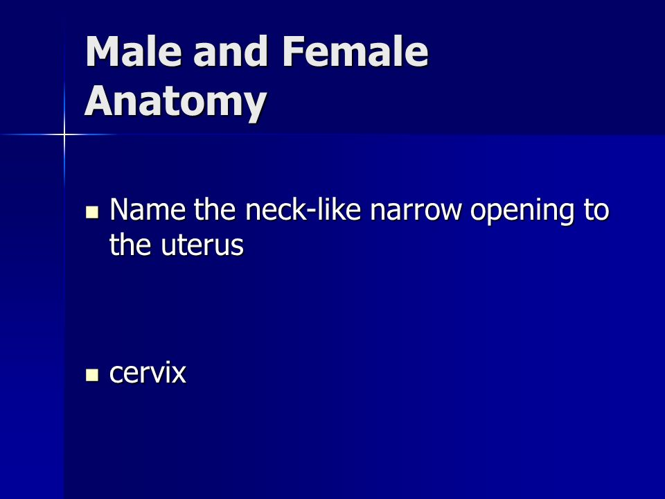 Male and Female Anatomy Name the neck-like narrow opening to the uterus Name the neck-like narrow opening to the uterus cervix cervix