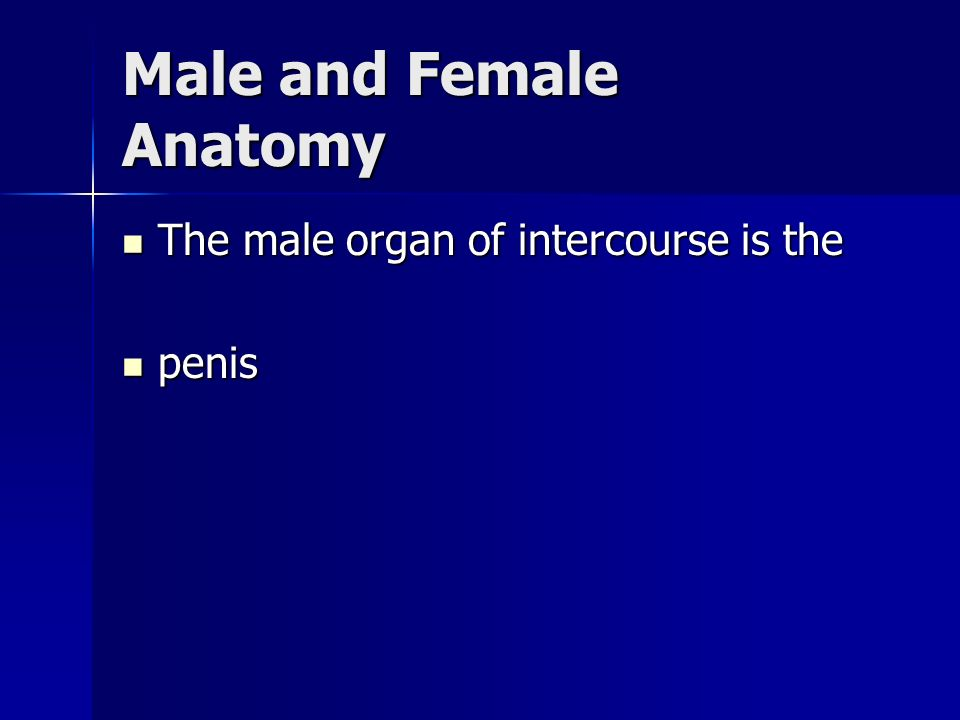 Male and Female Anatomy The male organ of intercourse is the The male organ of intercourse is the penis penis