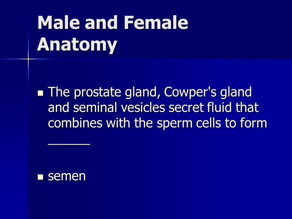 Male and Female Anatomy The prostate gland, Cowper s gland and seminal vesicles secret fluid that combines with the sperm cells to form ______ The prostate gland, Cowper s gland and seminal vesicles secret fluid that combines with the sperm cells to form ______ semen semen