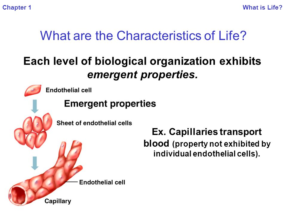 Chapter 1 What is Life What are the Characteristics of Life