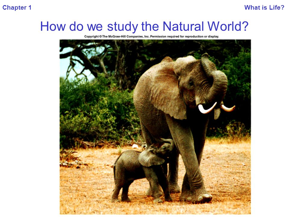 Chapter 1 What is Life. How do we study the Natural World.
