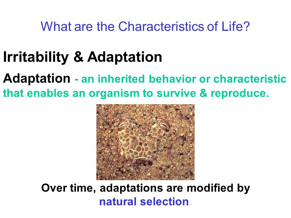 What are the Characteristics of Life.