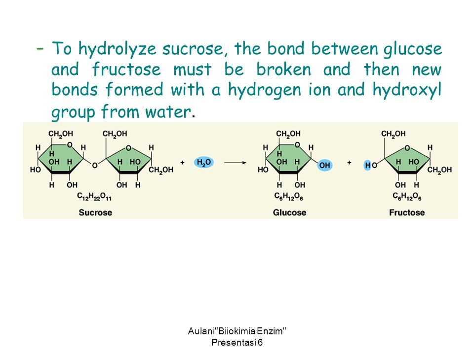 Aulani Biiokimia Enzim Presentasi 6 –To hydrolyze sucrose, the bond between glucose and fructose must be broken and then new bonds formed with a hydrogen ion and hydroxyl group from water.