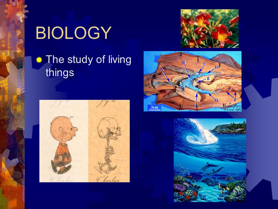 BIOLOGY  The study of living things