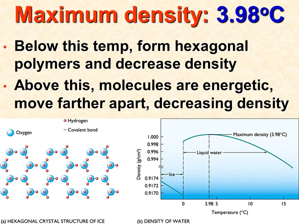 Maximum density: 3.98 o C Below this temp, form hexagonal polymers and decrease density Below this temp, form hexagonal polymers and decrease density Above this, molecules are energetic, move farther apart, decreasing density Above this, molecules are energetic, move farther apart, decreasing density