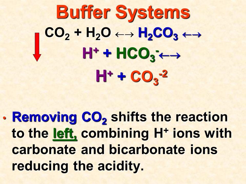 Buffer Systems CO 2 + H 2 O  H 2 CO 3  H + + HCO 3 -  H + + HCO 3 -  H + + CO 3 -2 H + + CO 3 -2 Removing CO 2 shifts the reaction to the left, combining H + ions with carbonate and bicarbonate ions reducing the acidity.