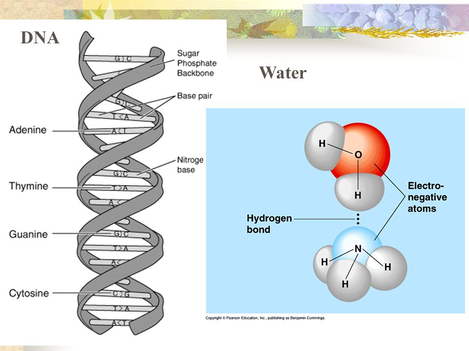 DNA Water