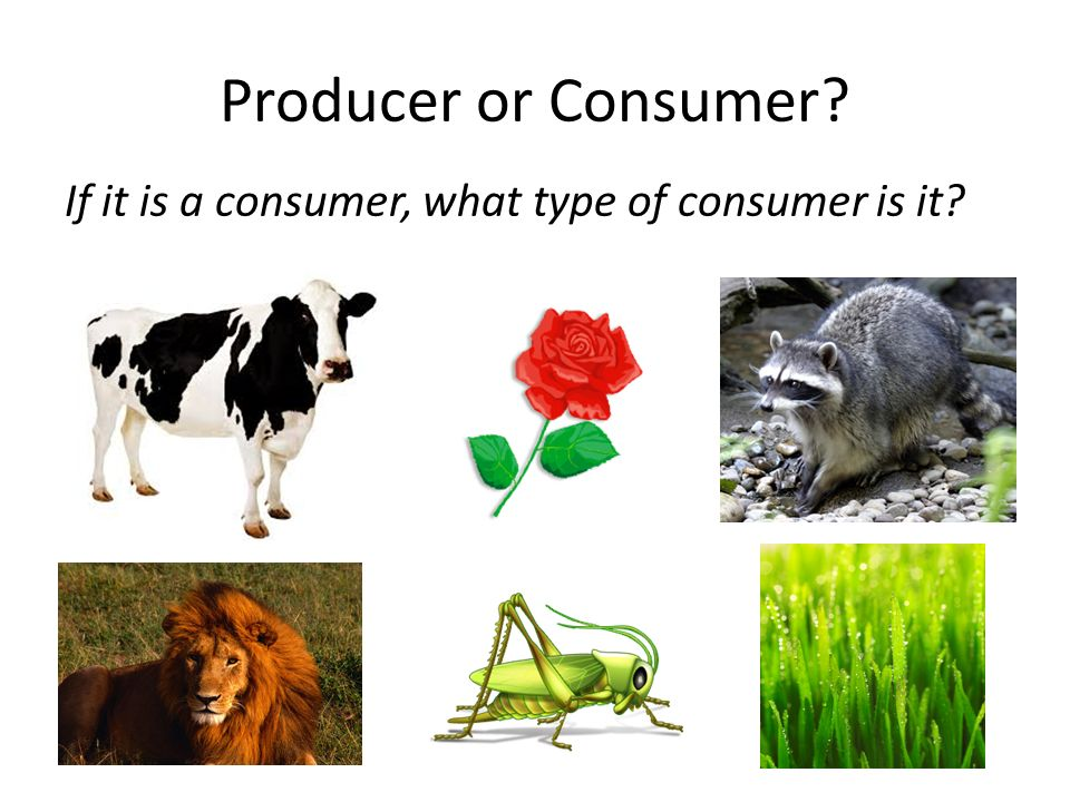 Producer or Consumer If it is a consumer, what type of consumer is it