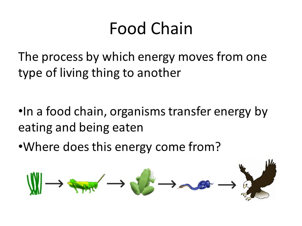 Food Chain The process by which energy moves from one type of living thing to another In a food chain, organisms transfer energy by eating and being eaten Where does this energy come from