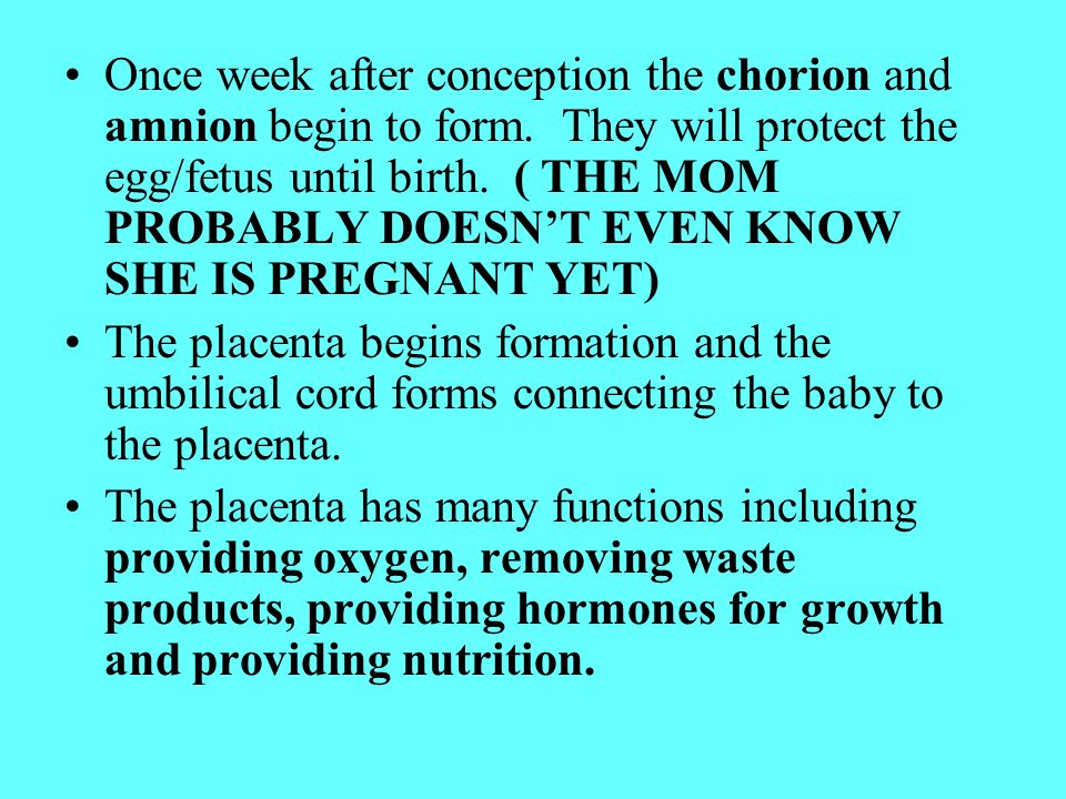 Pregnancy. In the beginning… Conception begins with an ovum ...
