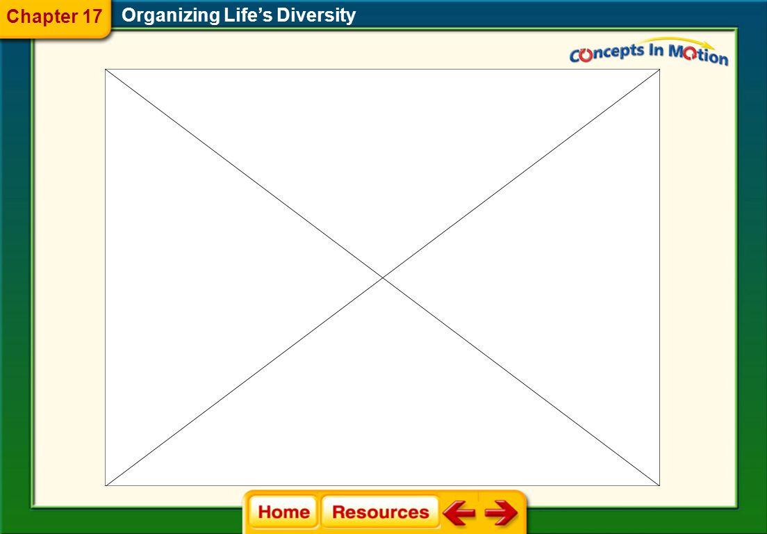 Organizing Life's Diversity 17.2 Modern Classification Chapter 17