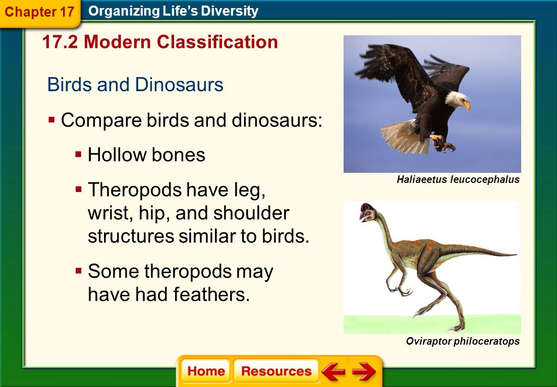Morphological Characters  Shared morphological characters suggest that species are related closely and evolved from a recent common ancestor.