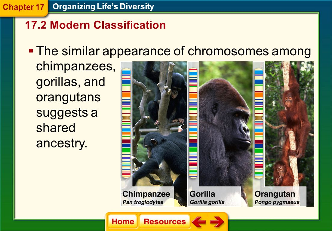 Biochemical Characters Organizing Life's Diversity  Scientists use biochemical characters, such as amino acids and nucleotides, to help them determine evolutionary relationships among species.