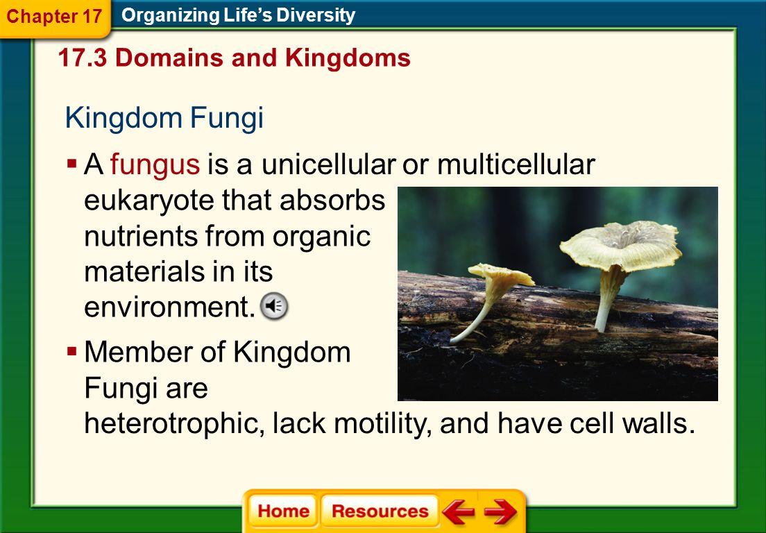 Kingdom Protista Organizing Life's Diversity  Protists are classified into three different groups— plantlike, animal- like, and funguslike.