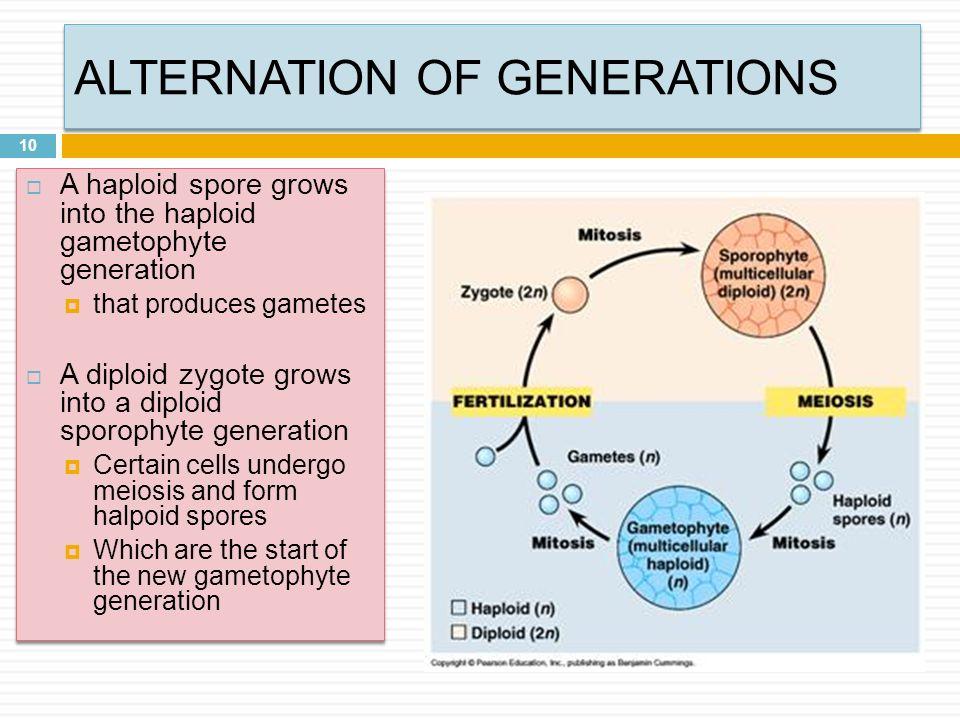 LIFE CYCLES OF PLANTS ABBOTTS COLLEGE ABBOTTS 1. TOPICS 2 ...