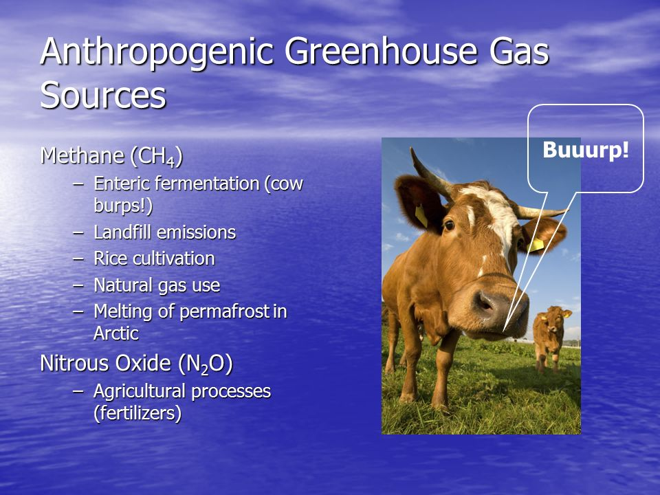 Anthropogenic Greenhouse Gas Sources Methane (CH 4 ) –Enteric fermentation (cow burps!) –Landfill emissions –Rice cultivation –Natural gas use –Melting of permafrost in Arctic Nitrous Oxide (N 2 O) –Agricultural processes (fertilizers) Buuurp!
