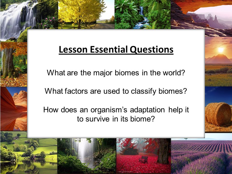 Lesson Essential Questions What are the major biomes in the world.